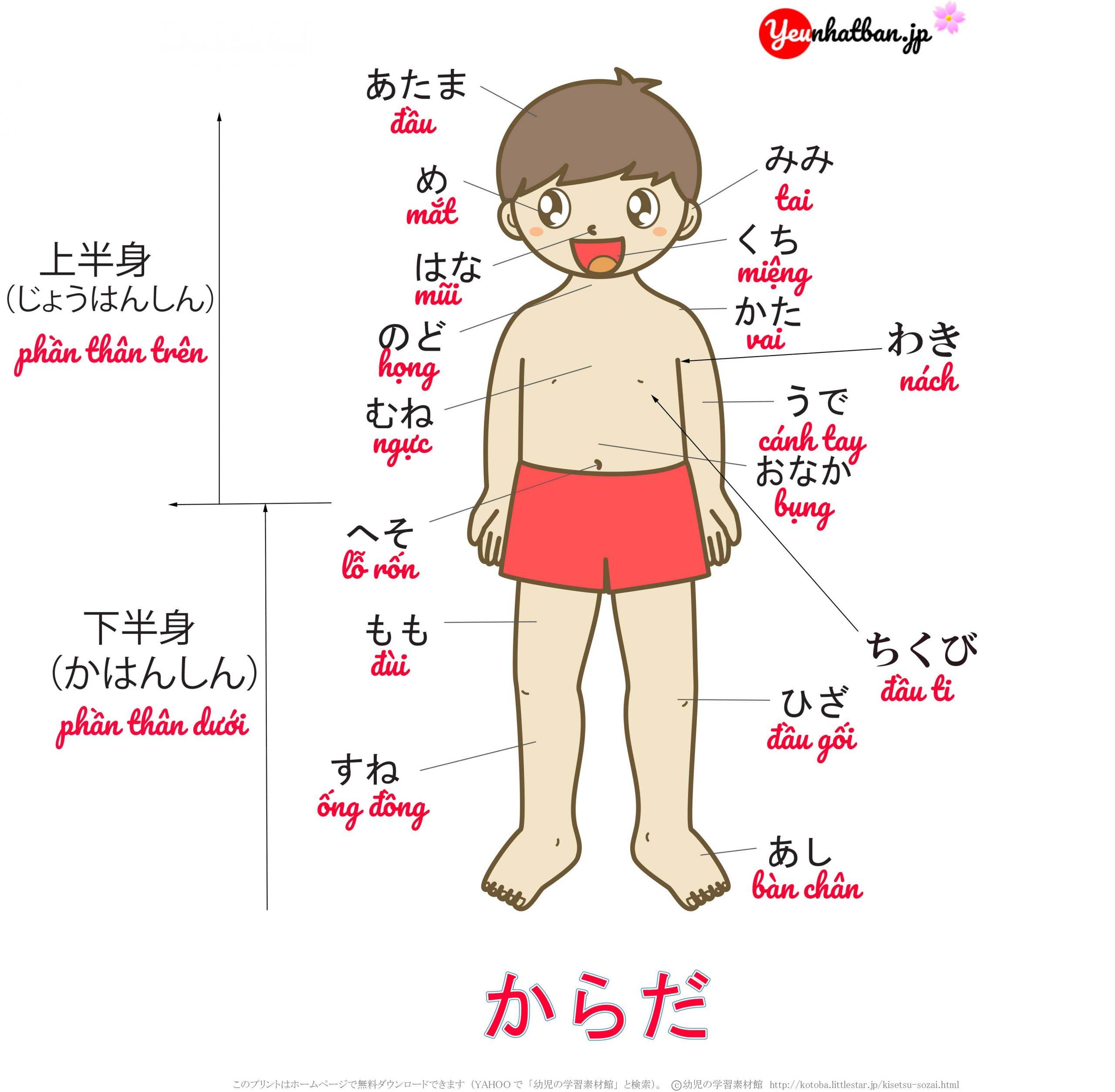 [Bí kíp] Học từ vựng tiếng Nhật nhớ cực lâu