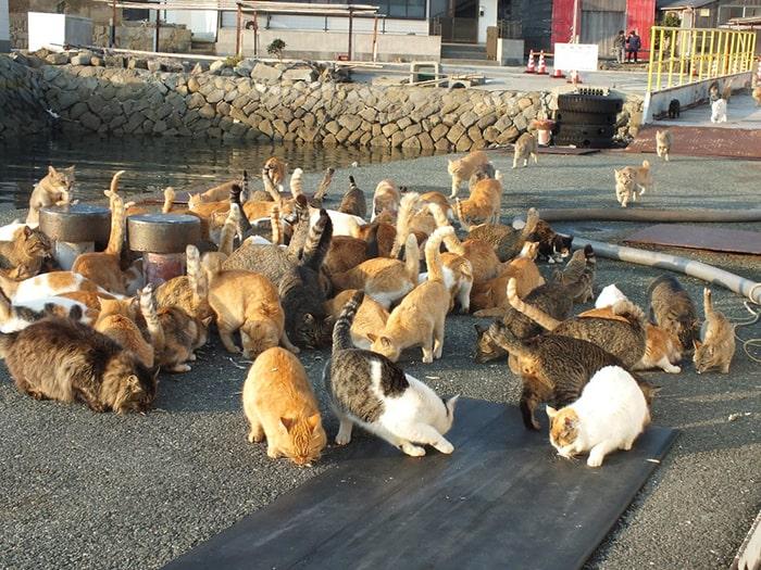 Đảo mèo AOSHIMA - Nơi trú ngụ của các bạn nhỏ  hoàng thượng 4 chân