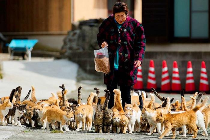 Mèo có ý nghĩa gì đối với người Nhật Bản