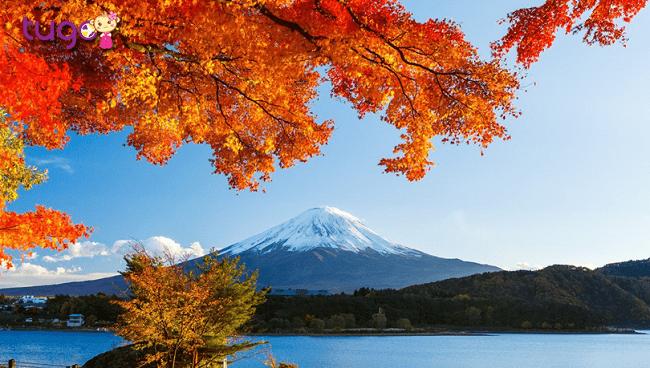 Mùa thu Nhật Bản - Những loài cây tiêu biểu